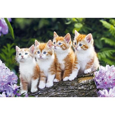 The Cat Crew