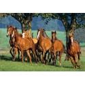 Пъзел - Quarter Horses