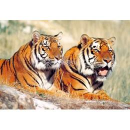 Пъзел - Tigers