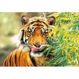 Пъзел - Tiger