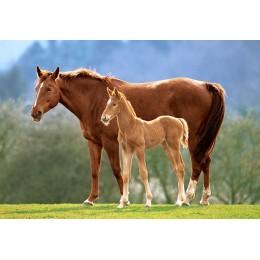 Пъзел - Westfalian Mare With Foal