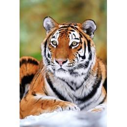 Пъзел - Siberian Tiger