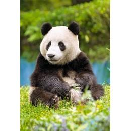 Пъзел - Panda