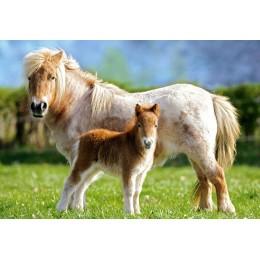 Пъзел - Ponies