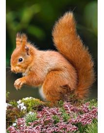 Пъзел - Squirrel